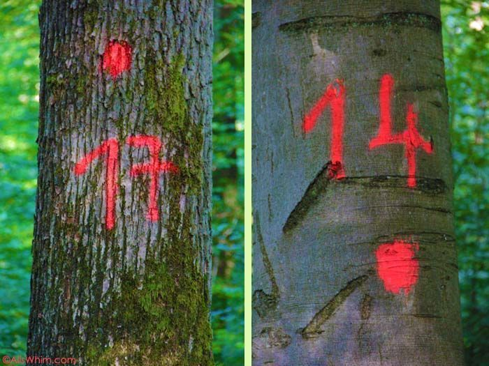 Marked trees